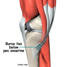 bursa Knee Pain in Swimmers