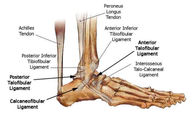 Rehab After An Ankle Sprain