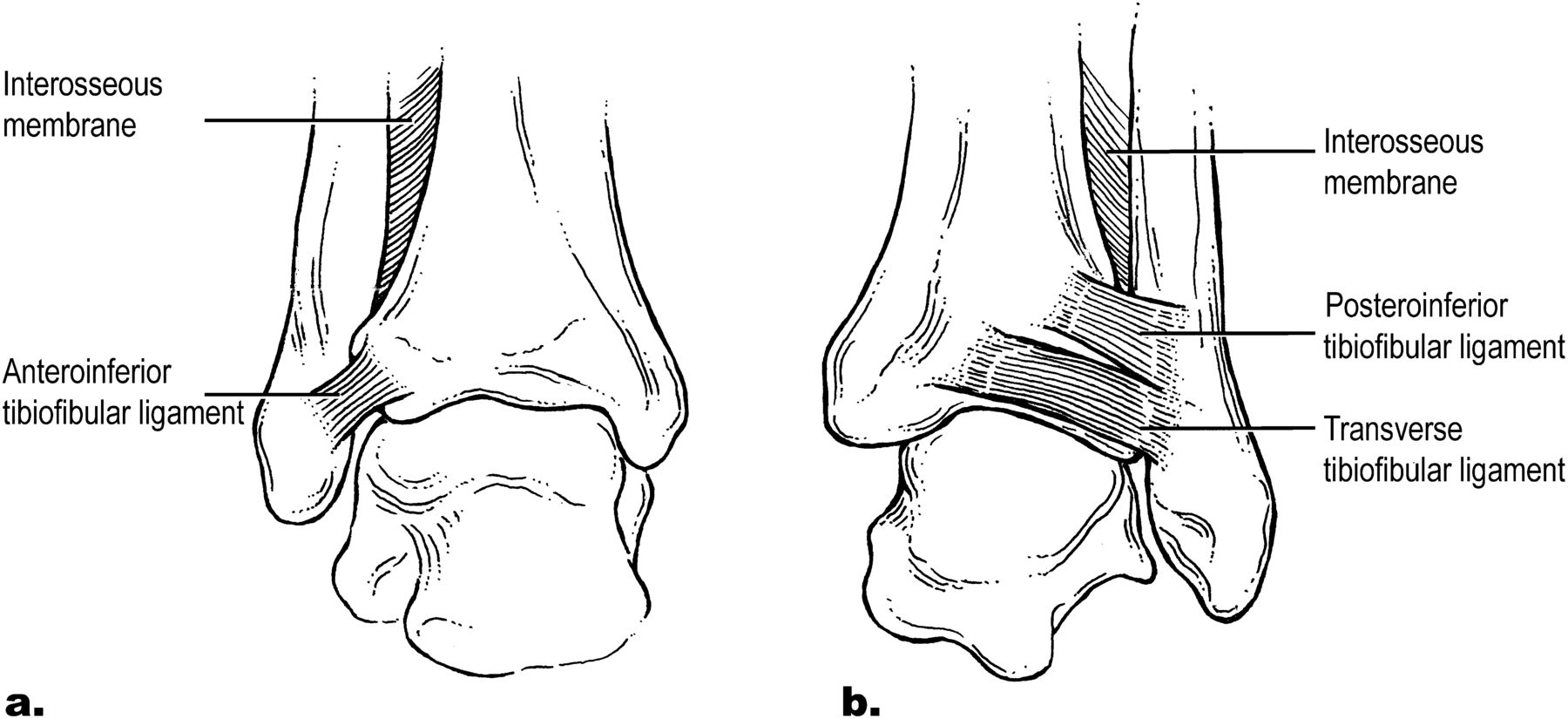 Ankle Injuries: Primary Care approach